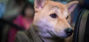 Prendre l'avion avec un animal de compagnie : comment faire ?
