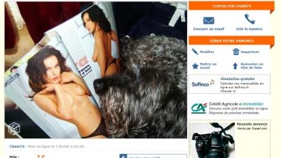 Une photo coquine de chien en vente sur Leboncoin